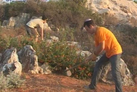 Volunteers Work the Land of the Shomron