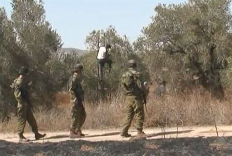 IDF Soldiers Safeguard Arab Olive Harvest