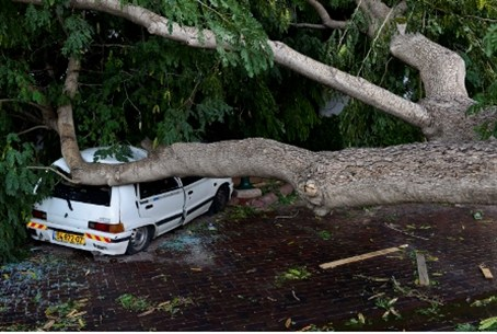 View of a car damaged by a large tree had blo