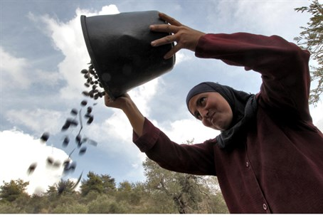 PA woman harvests olives