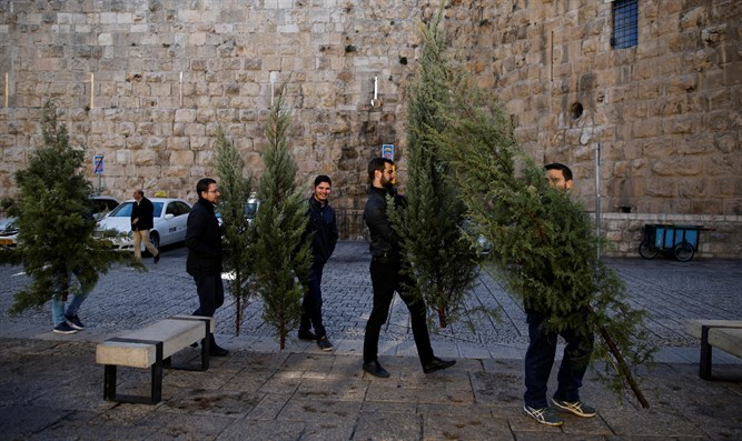Christmas trees distributed in Jerusalem