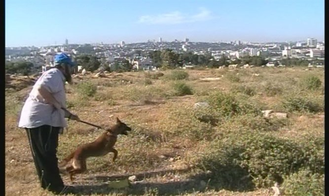 Jewish Legion's Dogs at Hershkowitz Property