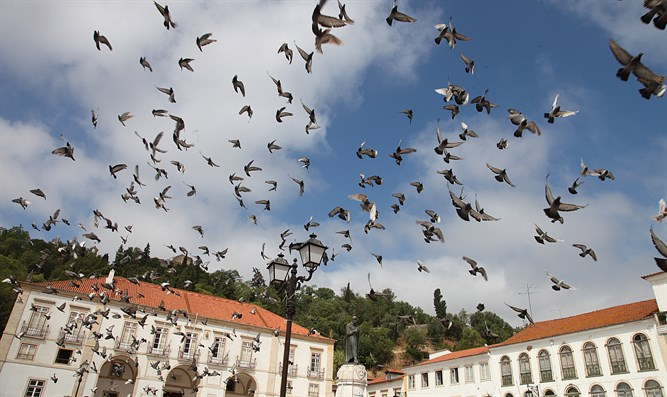 Soaring heavenward in Tomar, Portugal at site of inquisition