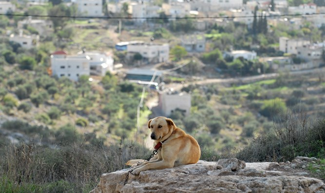 Dog guards Har Hemed next to Kedumim; Arab Kadum seen in background