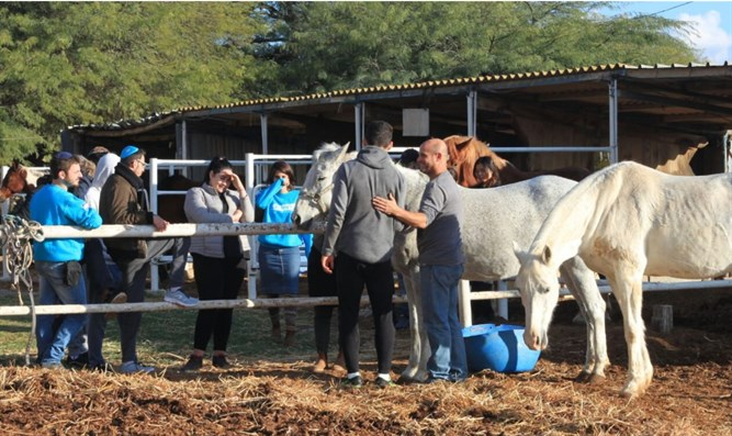 curing trauma with love and animals israel national news