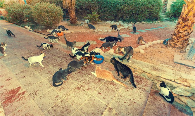 Stray cats in Israel
