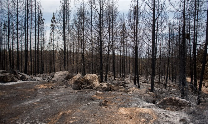 Ben Shemen Forest, after the fire