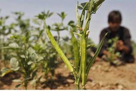 Israel Offers Free Agricultural Training to PA - Israel