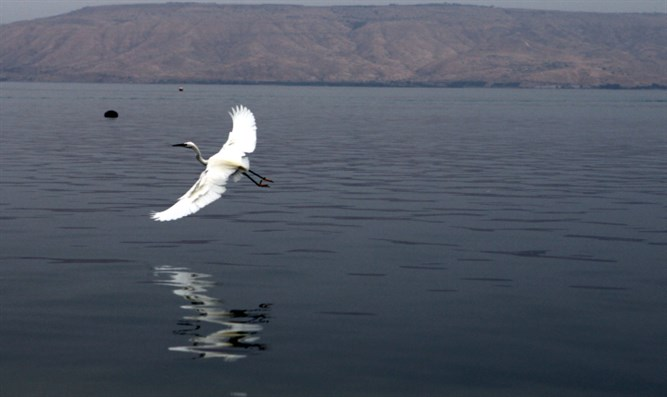 Kinneret (Sea of Galilee)