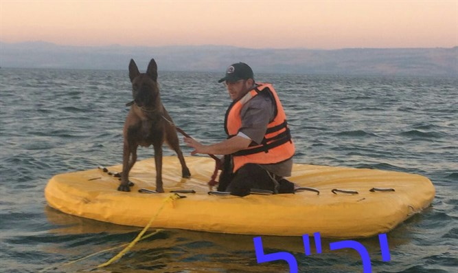 Cadaver dog searching Kinneret