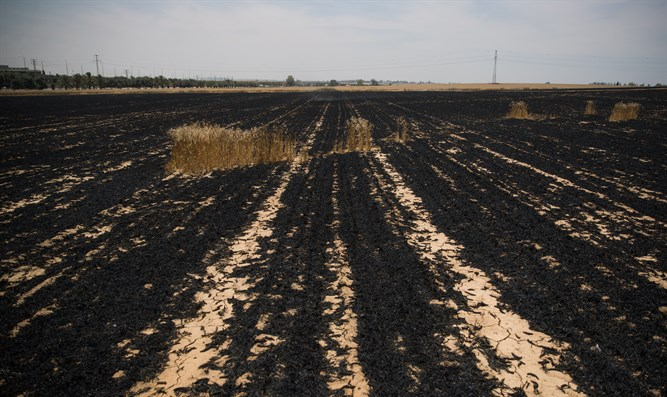 A scorched field near the Israel-Gaza border